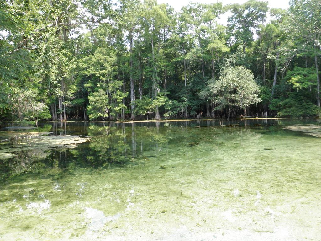 Manatee Springs State Park Florida Tripcarta