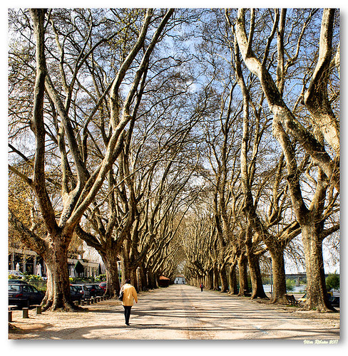 Avenida dos Plátanos by VRfoto