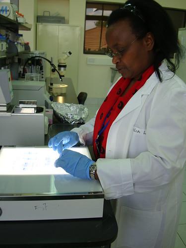 Merkel visits ILRI Nairobi: ILRI technician Cecilia Muriuki