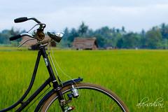 bike for green
