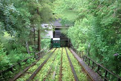 funicular, vehicle, transport, rail transport, green, forest, rolling stock, jungle, track,