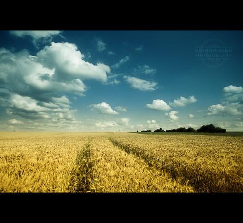 field canon angle belgium belgique wide belgië sigma filter 7d grad 1020 champ wallonie 2011 hainaut rosseignies davidherreman ruedepetitroeulx