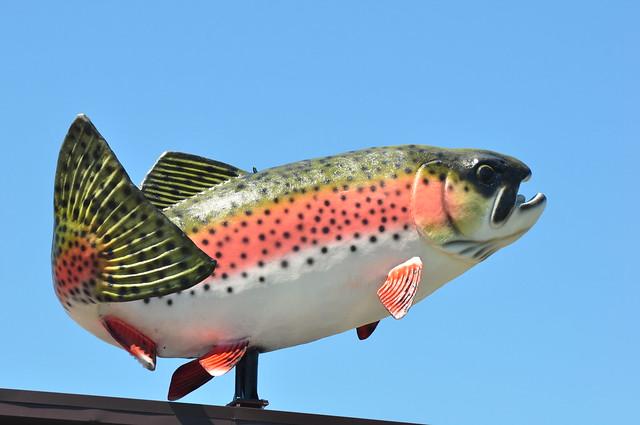 Morey 39 s fish market flickr photo sharing for Morey s fish