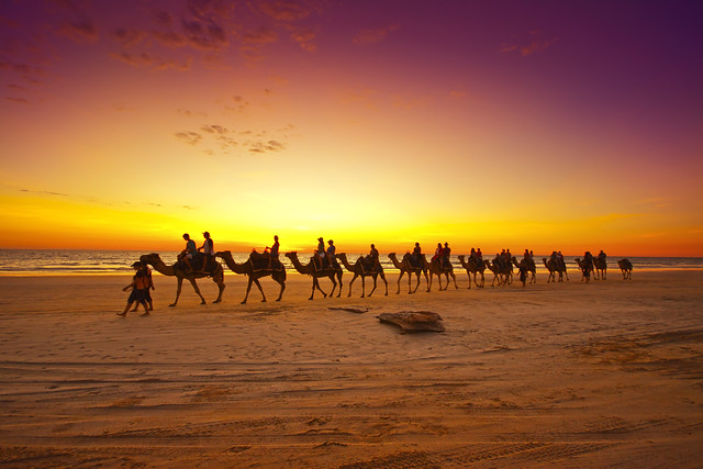 Camels at sunset [Explored]