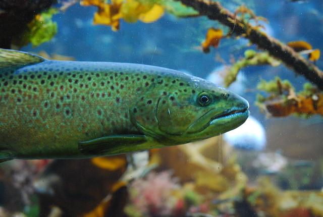 Pez tropical en el acuario de Bergen
