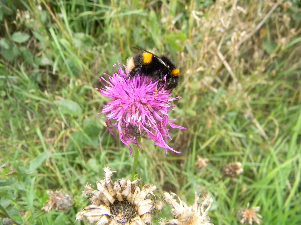 Bee Great Chesterford to Newport
