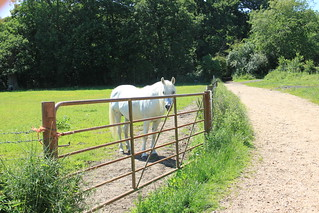 White horse, Pinnerwood Farm