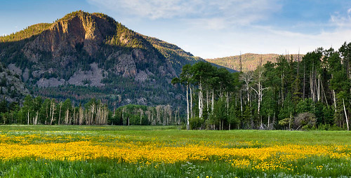 morning flowers trees summer panorama usa mountains flower green nature yellow clouds sunrise canon landscape dawn scenery colorado unitedstates natural scenic bluesky panoramic aspen wildflower poudre flowersplants highway14 larimercounty sleepingelephant t2i kinikinik canont2i