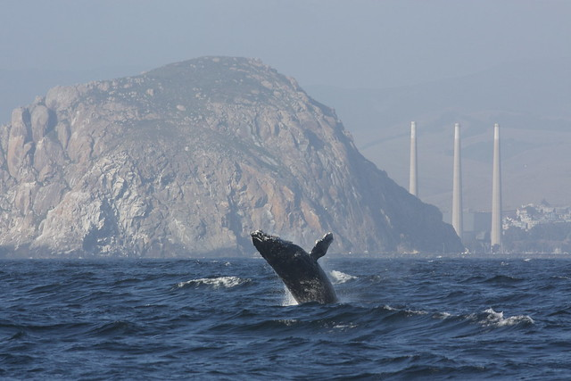 Humpback whale and Smokestacks by Devra-minicooper93402