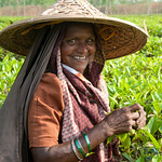 Laughing Tea Picker - Srimongal, Bangladesh
