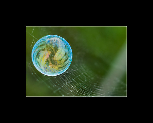 Wet web and a bubble