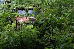 John McLean's Autoyard