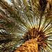 فاكهة الصحراء by fahad alyousef