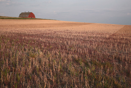 Saskatchewan Red by peterkelly