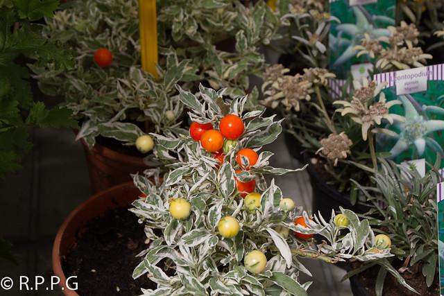 Flores y plantas viveros del cerecedo leon espa a - Viveros de plantas en madrid ...
