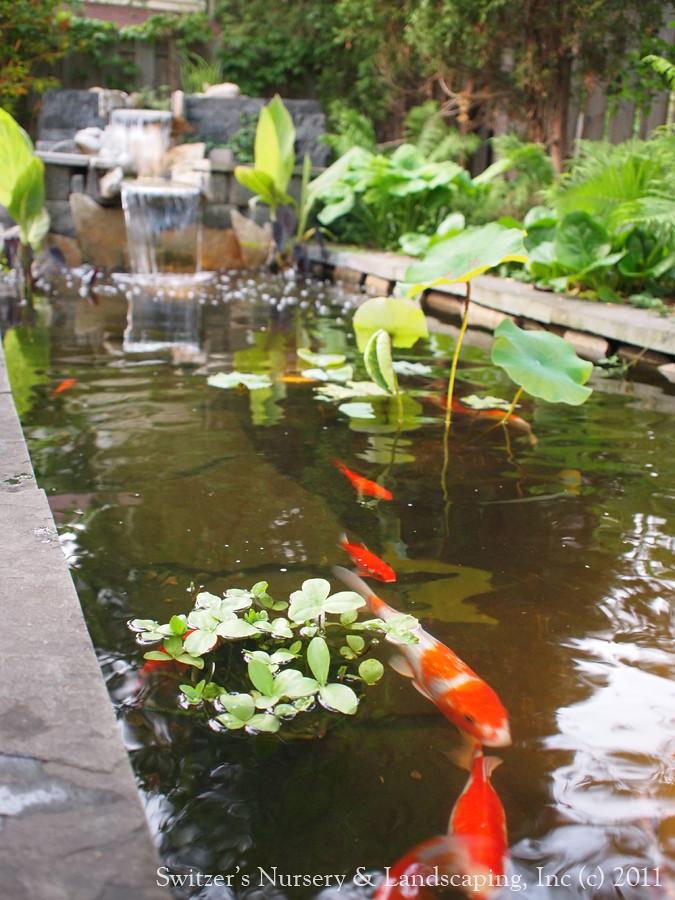 Minnesota landscape design inspired by bali natural for Stone koi pond
