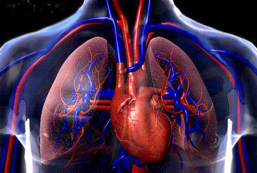Heart Screening and the Different Tests that are Necessary