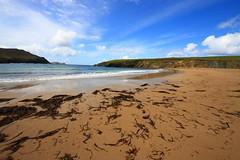 Beached seaweed
