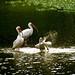 Pinckney Wildlife Refuge