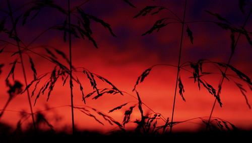 sunset red sun garden olympus dk silhuette e510 silhuettes denmak natureplus hjeds
