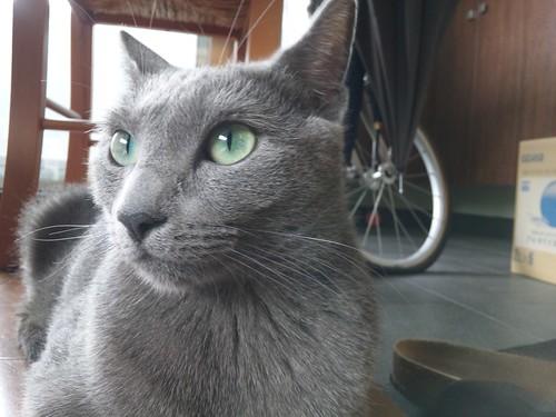 すべての猫がレーザーポインターに反応するわけではない