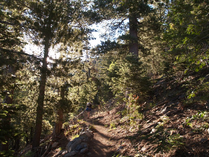 Morning light on the San Bernardino Peak Trail