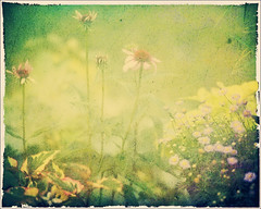 Memories From the Back Garden