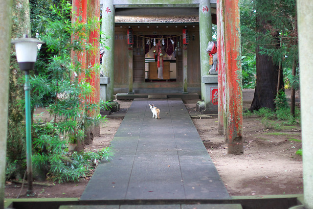 Shrine and Cat #3