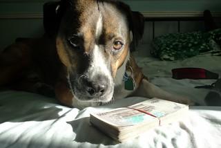 Milo enjoys the exchange rate