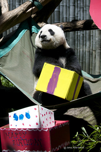 Yun Zi celebrates 2nd Birthday