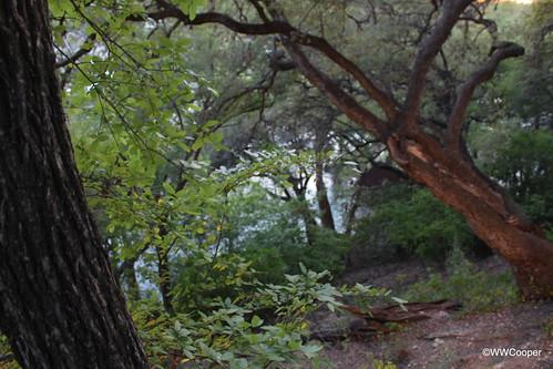 texas geotag gruene