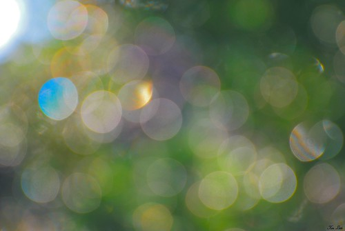 Happy Bokeh..