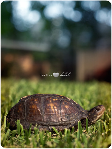 175/365 Turtles Love Bokeh