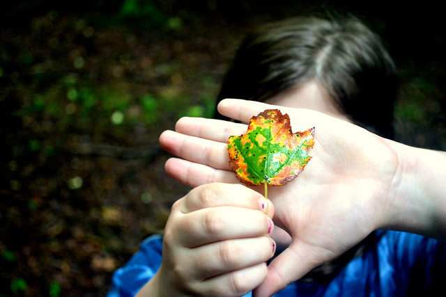 Peek-a-boo Leaf