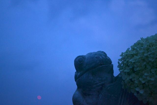 Blue Hour Frog
