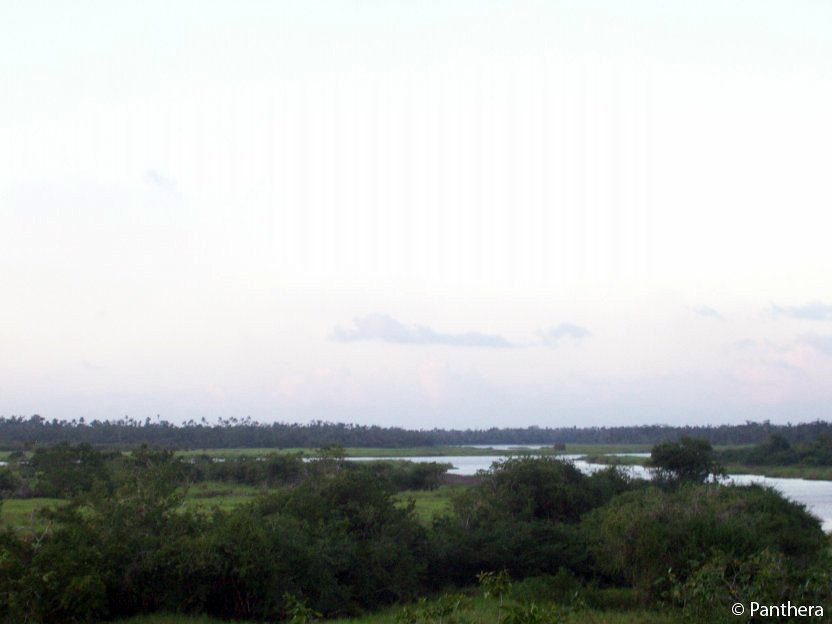 Cox Lagoon before fires, Central Belize Corridor