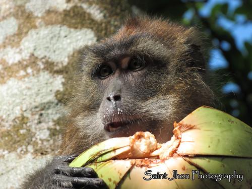 jaro leyte mongkey