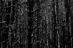 Le mystère de la forêt