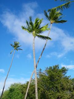 Image of Queen's Surf Beach near Honolulu. plant beach architecture hawaii surf pacific waikiki oahu tropical honolulu plam