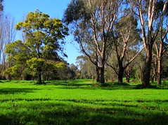 Winters Day, Banksia Park, Melbourne