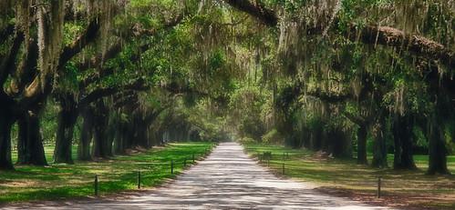 road trees moss southcarolina plantation boonehall quantaray28200mmf3856 canoneos1dsmarki