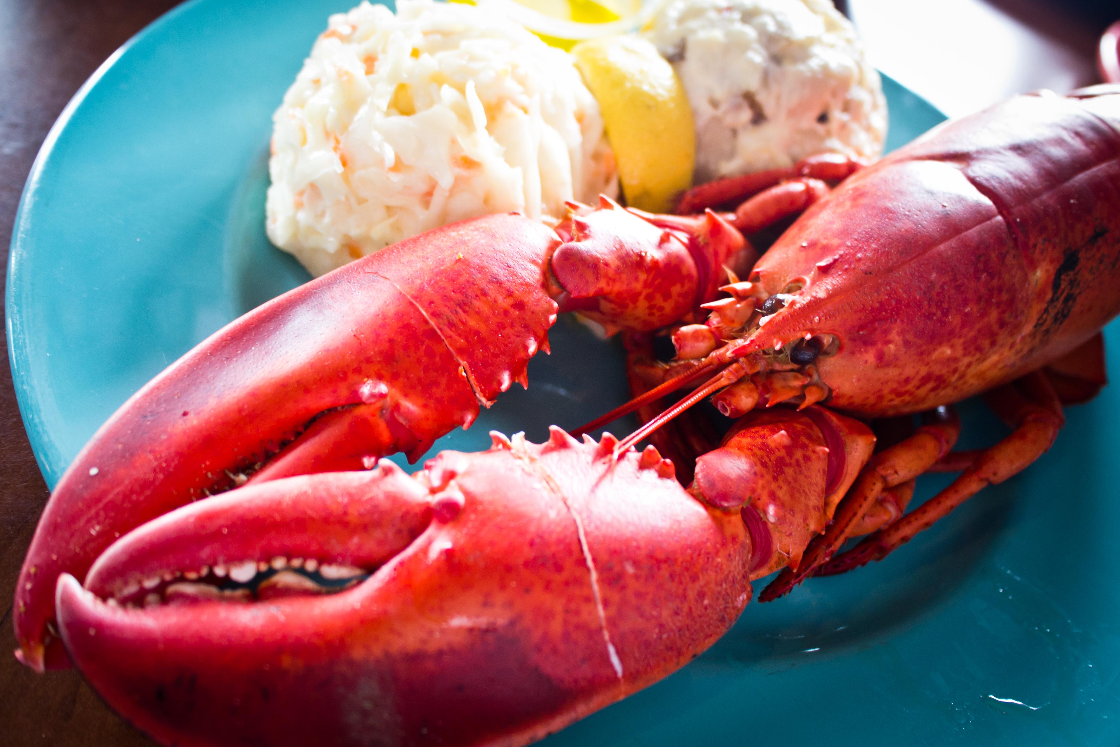 Lobster Dinner | Flickr - Photo Sharing!