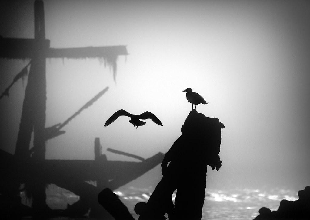 Seagulls on West Pier