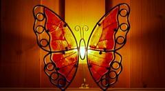 Schmetterling bei Nacht