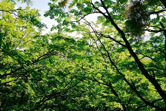 Vedení města Liberce přerušilo vytváření územní studie zeleně
