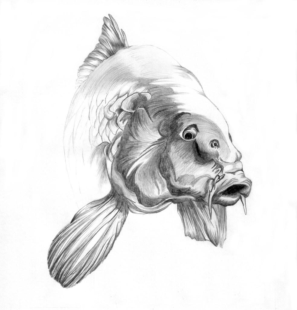 Silver carp drawing
