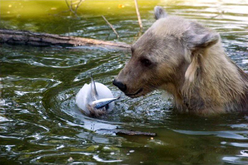 regime fraicheur au zoo aout 2003
