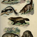 Flickr photo 'n232_w1150' by: BioDivLibrary.