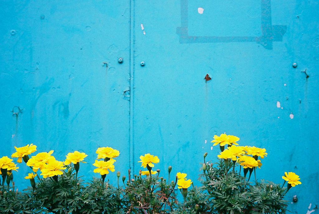 駅に咲くマリーゴールド 2011/07/31 trip35_01_07