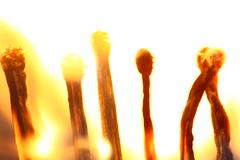 Feuerspiele / Firegames